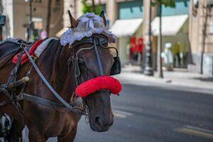 Pferdekutsche in Palermo