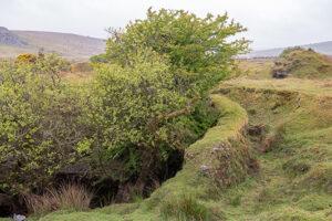 Bodmin Moor Rueckeroberung der Natur