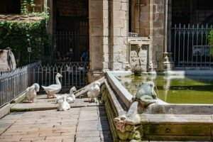 die gaense der kathedrale