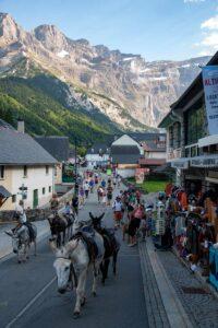 Esel und touristen
