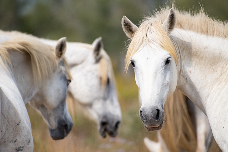 Frei laufende Pferde