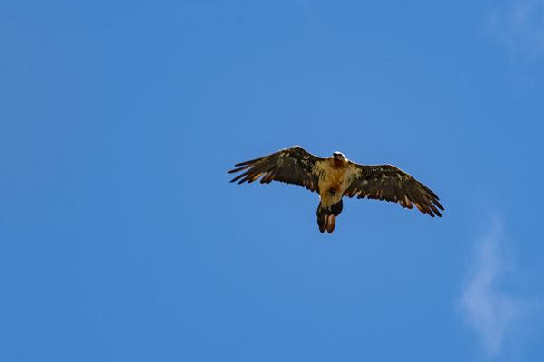 Auf dieser Strecke kannst Du oft Adler beobachten