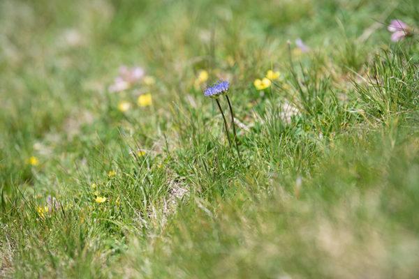 Im Juni sieht Du die Blüte besonders