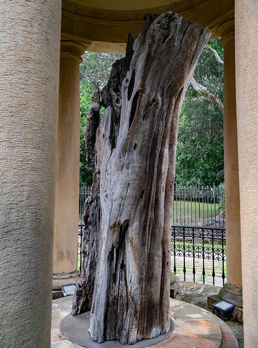 Baum von Gernica