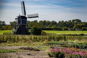 Die Niederlande sind bekannt für Blumen, Windmühlen, Käse und Strände