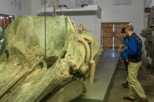 im walmuseum von Whale Safar Andenes